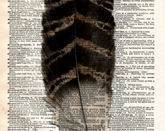 Vintage Dictionary Print - Bird Feather - Upcycled Recycled Antique Book Print - Woodland Natural History Bird