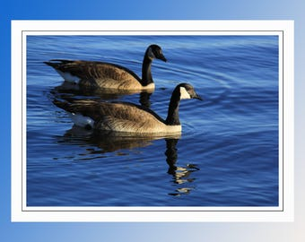 Canadian Geese. A Bi-fold Blank Note Card