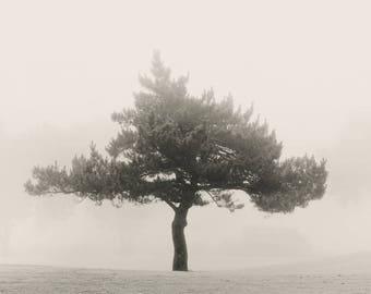 tree photography, minimalist landscape, trees, photography, trees in fog, fog photography, sepia photography, landscape photography, minimal