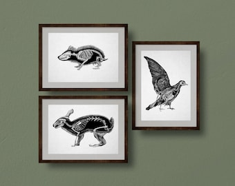 Animal Anatomy Prints, Set of 3: Pigeon, Hedgehog, Rabbit, from Original Ink Drawings. Scientific Illustration, Zoology, Skeleton, Art