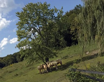 "Horse Huddle - (14"" x 11"")- Photograph - FREE SHIPPING!"