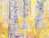 Birch Trees Painting - Pr...