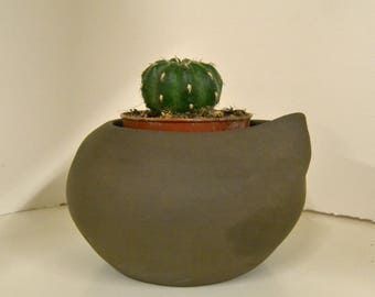 Ceramic pot for cactus or whatever you can think of. Pot