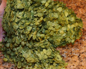 Hydrangeas, Preserved hydrangeas, Green hydrangeas, Green preserved hydrangeas