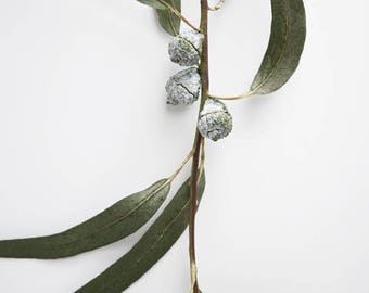 "Minimalist nature print wall art sage olive green white eucalyptus wall art nature print botanical print ""Eucalyptus Sprig Five"""