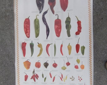 Giant poster of Pepper varieties great restaurant or kitchen decor or gardener gift Red Green Yellow chile peppers