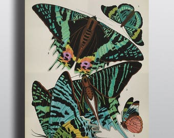 Antique Butterfly Print, Wall Art, Vintage Prints, Art Nouveau, 1920s, Entomology Print, Insect Print, Illustration, Wall Art, Wall Decor