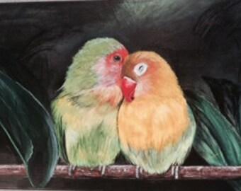 Lovebird Parrots