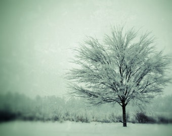 First Snow - print of a snowy tree - signed and matted