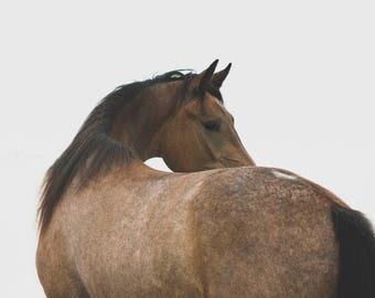 Horse Photography | Wall Art Print | Horse Print | Equine Art | Horse Interior Art | Animal Print | Equine Fine Art Print | Home Decor