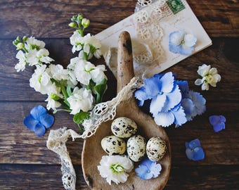 Spring Eggs ~ 8x10 photo print