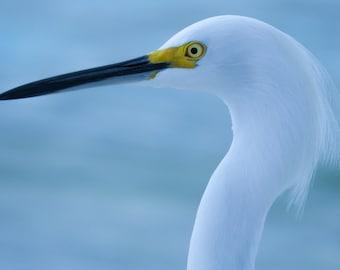Egret at the Beach, Bird, Wall Decor, Fine Art Photography, Digital Download, Printable Art