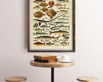 Motif de poisson antique, Vintage poisson Art, océan Print Vintage, victorien imprimé, impression de l'océan, mer Art, mer peinture, peinture, impression de l'océan de poisson