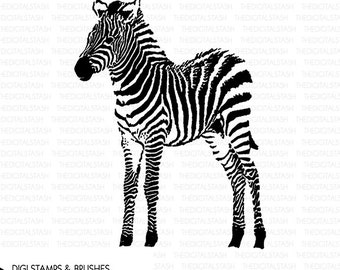 Baby Zebra - Digital Stamp and Brush - INSTANT DOWNLOAD - for Scrapbooking, Cards, Collage, Invites, Crafts and More