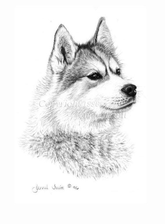 11 x 14 Siberian Husky Art Print from Original Pencil Drawing