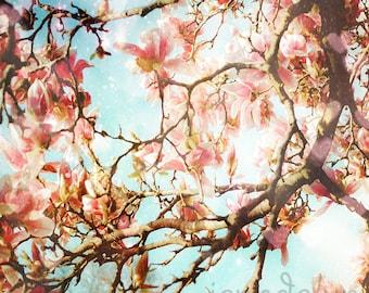 magnolia photography - pastel pink magnolia print - flower photography - magnolia tree