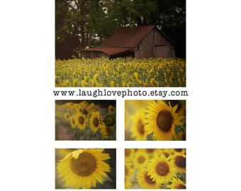 Sunflower Collection Farmhouse Prints, Barn Sunflowers Photos, Yellow Flower Floral Rustic Fixer Upper Style Print Set Home Decor Wall Art