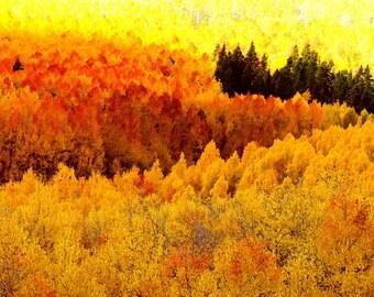 Aspen tree wall art, aspen trees fall, Colorado art, yellow orange red leaves, fall tree photo, rustic wall decor | Blazing Mountainside