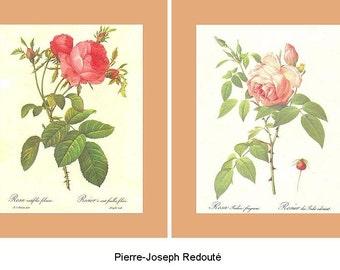 Rose Prints - Pierre-Joseph Redoute -