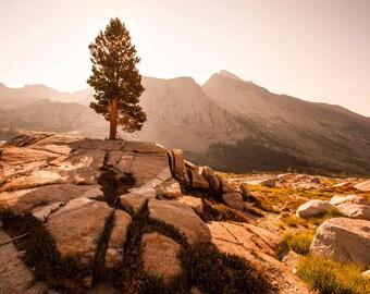 Lone Pine Print