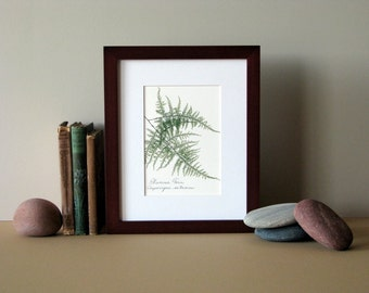 "Pressed fern art print, 8"" x 10"" matted, Plumosa fern, green woodland fern, fern botanical art, no. 025"