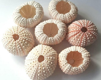 Small Pink Urchin Shells, Bulk Sea Shells