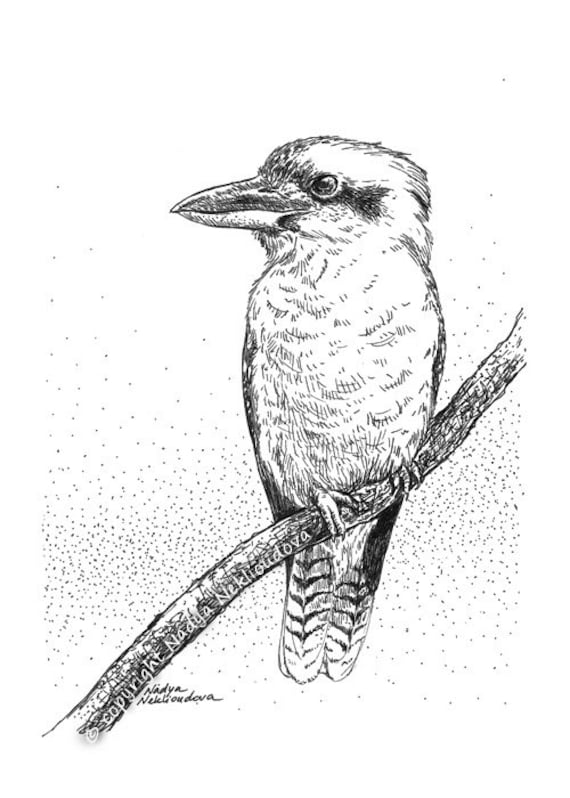 Kookaburra sketch original drawing 5x7 inches 12x18cm pen for Ink drawings easy