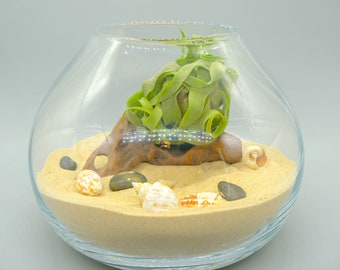 Air Plant Terrarium Kit with Large Glass Vessel Sand Sea Shells Driftwood Pebbles