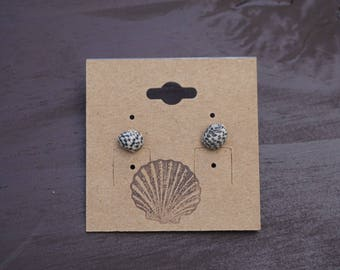 Nurite seashell earrings