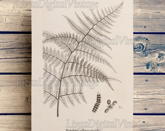 Download art, Fern print, Digital print art, Botanical print Vintage, Antique art, Botanical illustration, Fern, Botanicals, Art JPG PNG