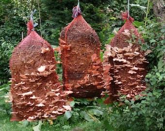 Mushroom Patch  Mushroom Growing Kits and Supplies