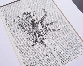 Seashell Beach Art Print Decor - Conch Ocean Illustration Artwork - Wall Bookworm Gift Homewares - Shabby Chic Dictionary Bookish Women