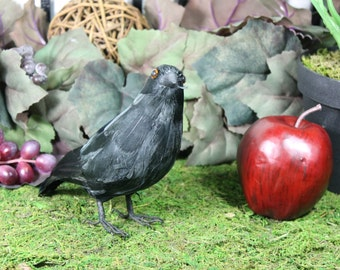 Furry Animal Feather Black CROW Raven Bird Taxidermy Horror Haunted Halloween