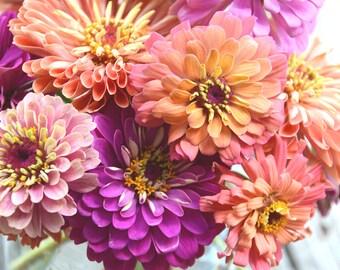 Pastel Zinnia Seeds, Heirloom Zinnias, Mix Pastel Zinnia Flowers, Great for Cut Flower Gardens and Urban Garden, Butterfly Garden Seeds