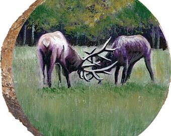 Dueling Elk - DAE013