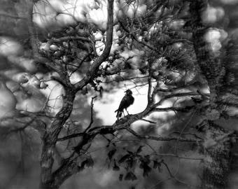 Landscape, Crow, Raven, Black and White, Photograph, Wall Art, Print