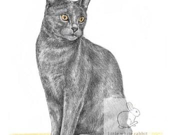 Jasper the Cat - Blank Card