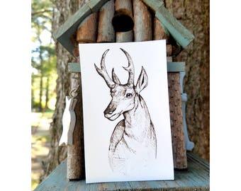 Nature, Pronghorn, Magnet, Animal,