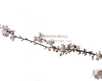 Blossom Flower Overlay