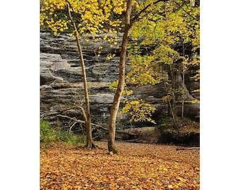 """Fine Art Color Fall Nature Photography of Starved Rock State Park in Illinois - """"Autumn Gold in Illinois Canyon 2"""""""