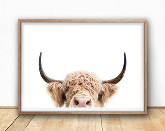 Highland Cow Print -  Farm Animal Wall Art, Digital Download, Cow Poster, Cattle Photography, Animal Portrait, Cow Closeup, Farm Nursery