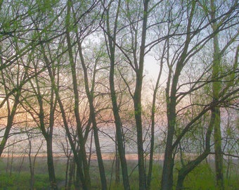 Trees in foggy morning,  Bluffer's Park,  Toronto, framed print