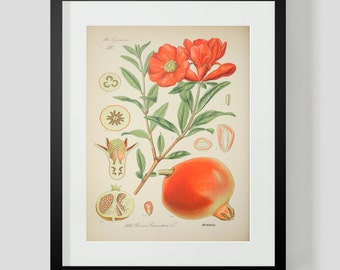 Botanical Print Plate 346