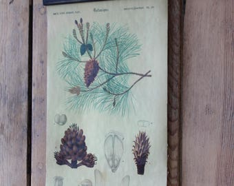 Pine cone/ pine tree/ botanical science chart/ vintage inspired/ wall decor / fabric and paper