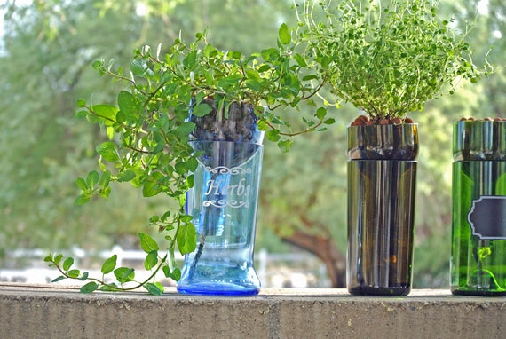 Hydroponic Garden In Large Blue Glass Upcycled Bottle / Indoor Herb Garden  / Vodka Gifts Bottle Planter / Glass Terrarium Hydroponics Herbs From ...