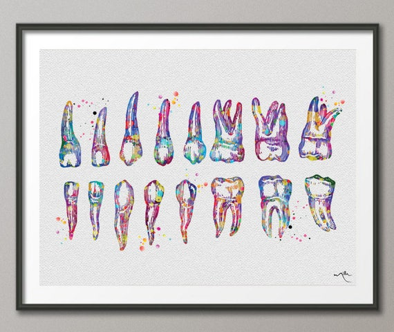 Teeth diagram watercolor print tooth anatomical art tooth ccuart Choice Image