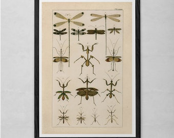VINTAGE NATURE PRINT- Antique Nature Art Print - Antique Insect Print Butterfly Art Antique Natural History Print Wall Art Insect Art Print