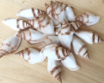 Fondant Whelks (20) - 3D fondant seashells - edible seashells - sugar seashell decorations - beach wedding cake - gumpaste seashells