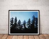 redwood photography print...