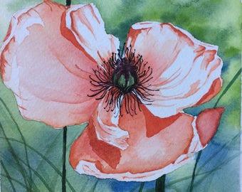 Poppy Splendor